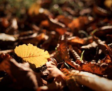 3 места в България, които да посетим през есента