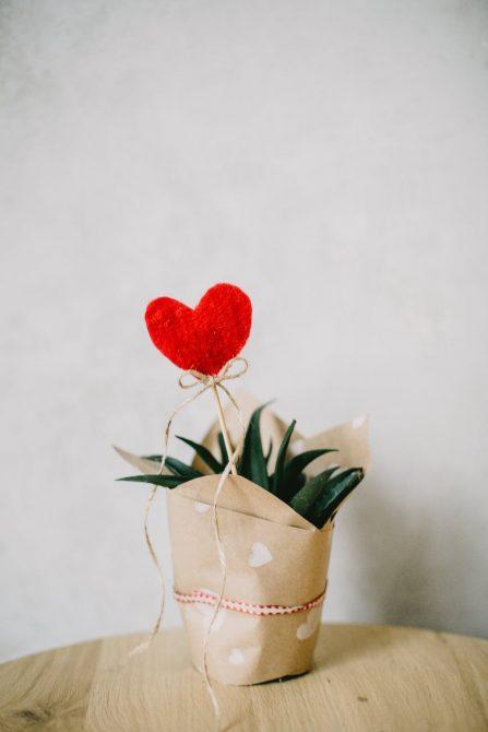 цвете за Свети Валентин